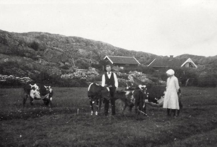Rudolf och Hilma Flagg  i Skogen med sina 4 kor.