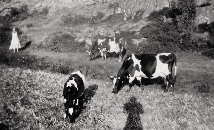 Hilma och Rudolf Flagg med 4 kor.