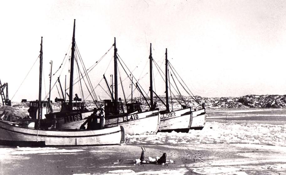 Malmöns Fiskeflotta 1947. Sommarön, Vitana , Midnattsol , Märta och Aldo. Foto Ingemar Blomsterberg.